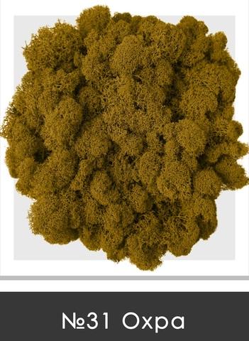 Стабилизированный мох (ягель) цвет №31 Охра