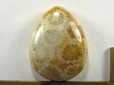 Кабошон коралла окаменелого, капля, 45x35x11 мм (3)