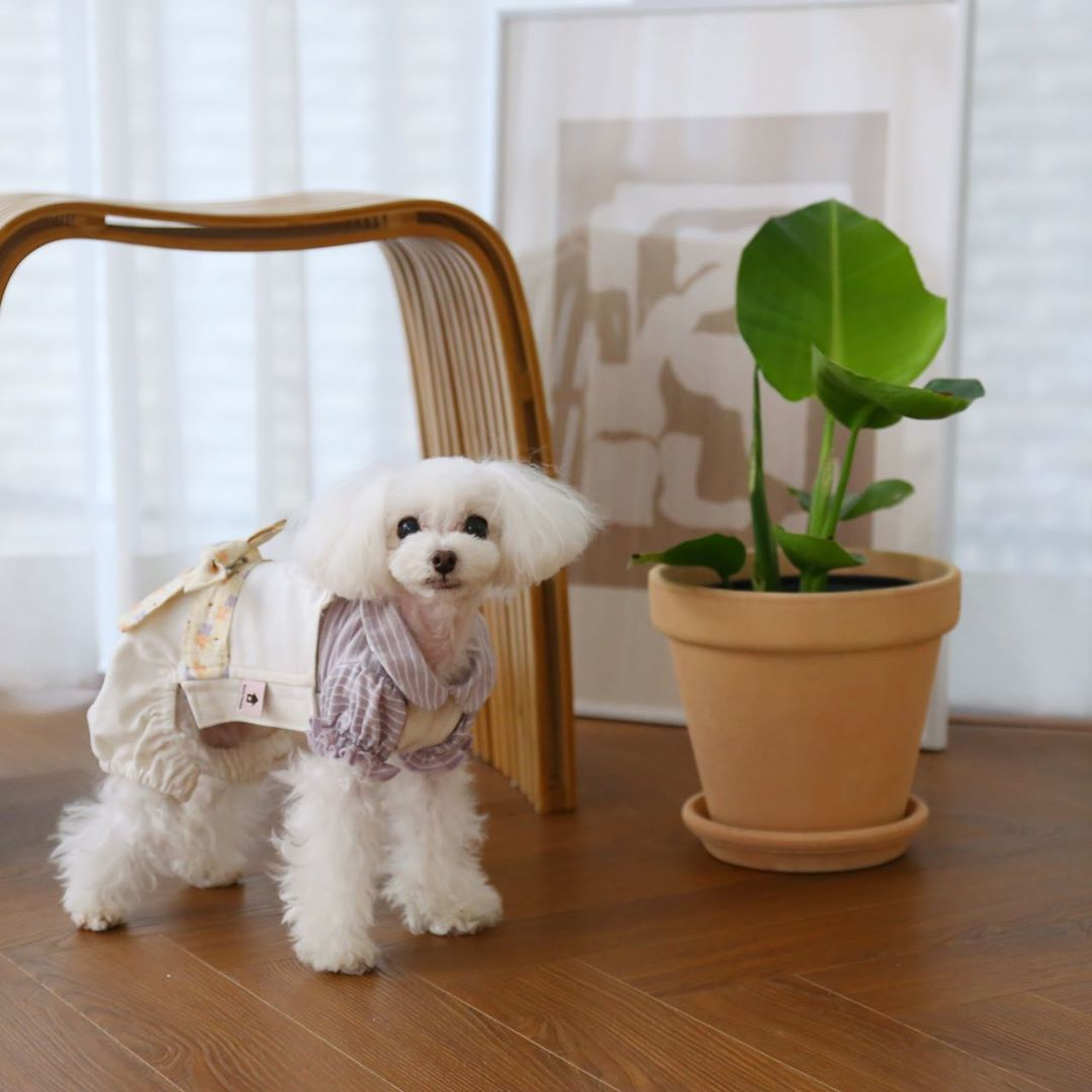 BH - Комбинезончики для собак