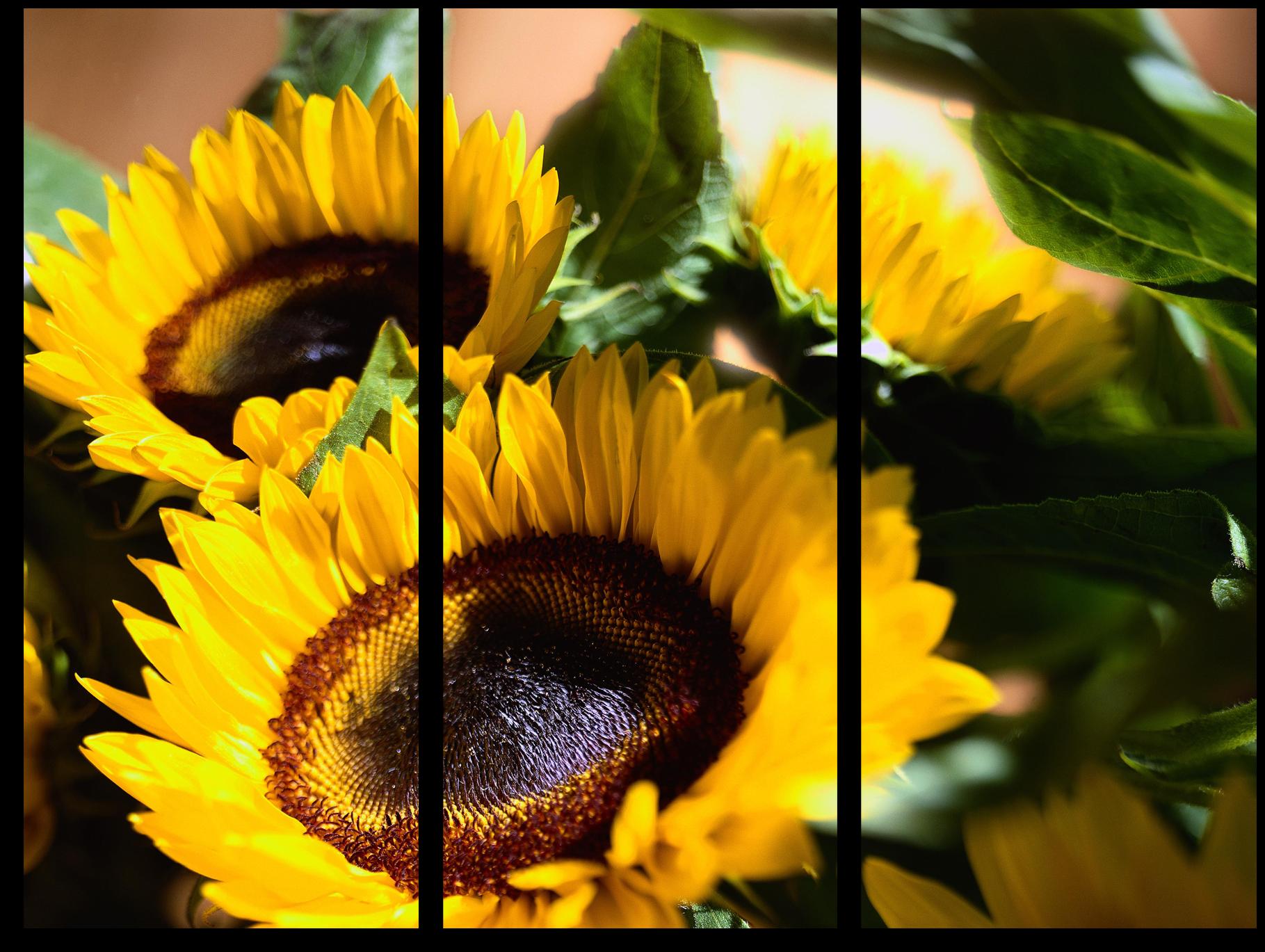 """Цветы Модульная картина """"Желтые подсолнухи"""" М265.png"""