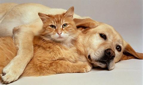 Алмазная Мозаика 38x28 Кот и собака отдыхают (арт. K1688)