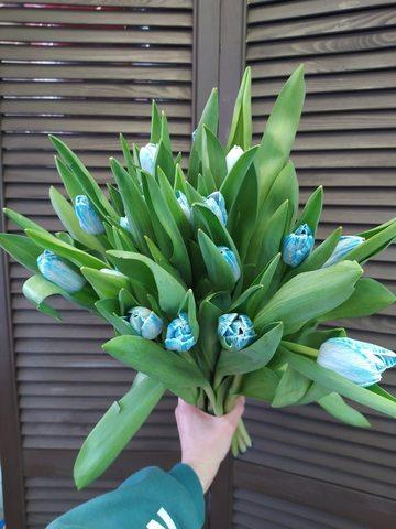 17 голубых тюльпанов  #1725