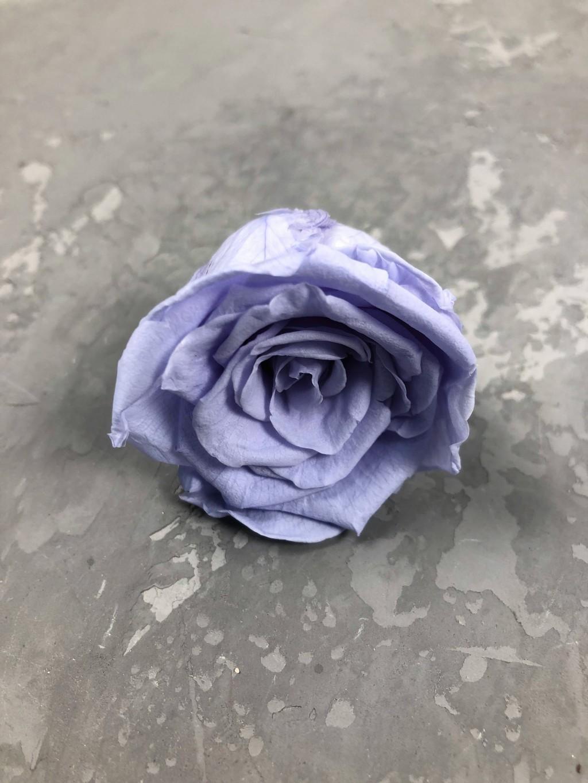 Роза классическая светло-фиолетовая d=4-5 см