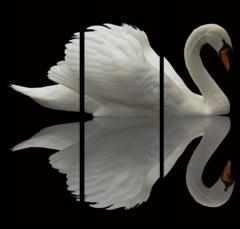 """Модульная картина """"Лебедь в отражении"""""""