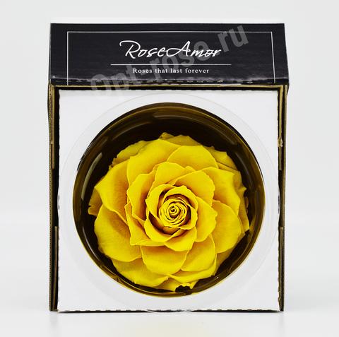 Стабилизированный Бутон Розы Кинг Rose Amor(Эквадор)Bonita Цвет Желтый (10-12см)
