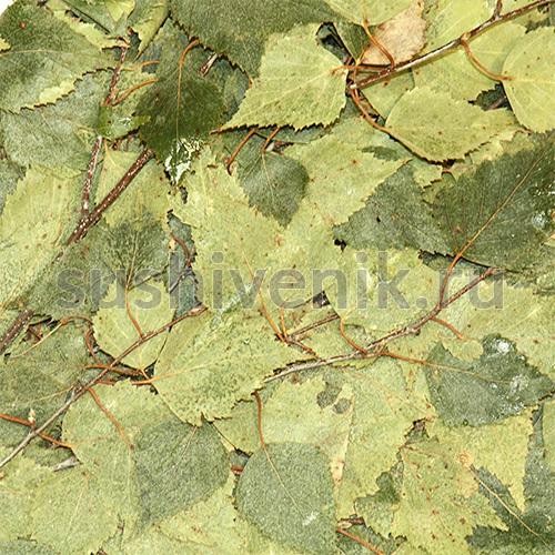Ветви берези (замороженные)