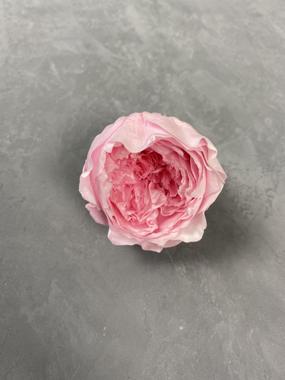 Роза пионовидная розовая d=5 см