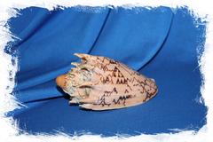 Ракушка морская декоративная Cymbiola imperialis