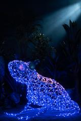 Световая Лягушка