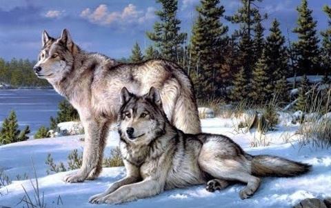 Картина раскраска по номерам 30x40 Волки зимой