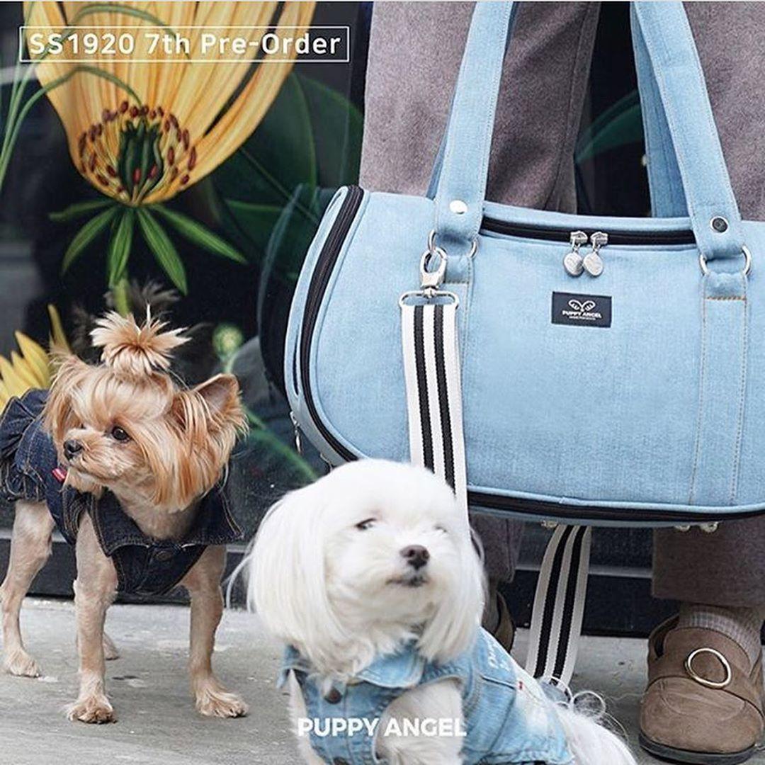 джинсовые сумки для маленьких собак