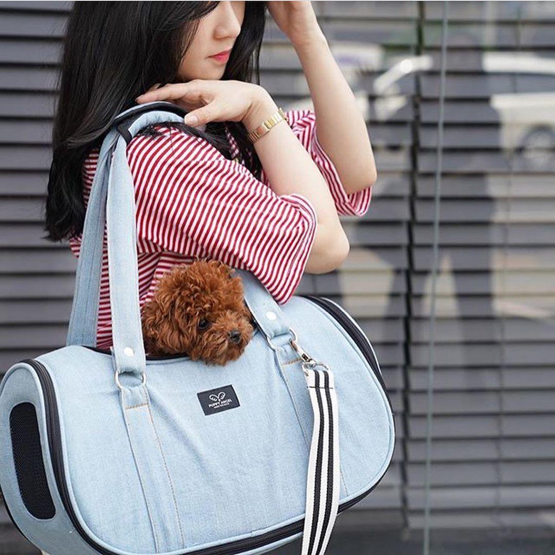 купить джинсовую сумку для собаки