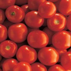 Санрайз F1 семена томата детерминантного (Seminis / Семинис)
