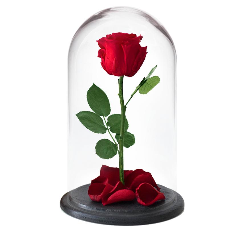 Это интересно Роза в колбе (вечная роза) 996ccf3da8753e6c8833ea19ec0c7537.png