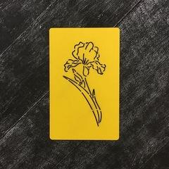 Цветок Ирис №1