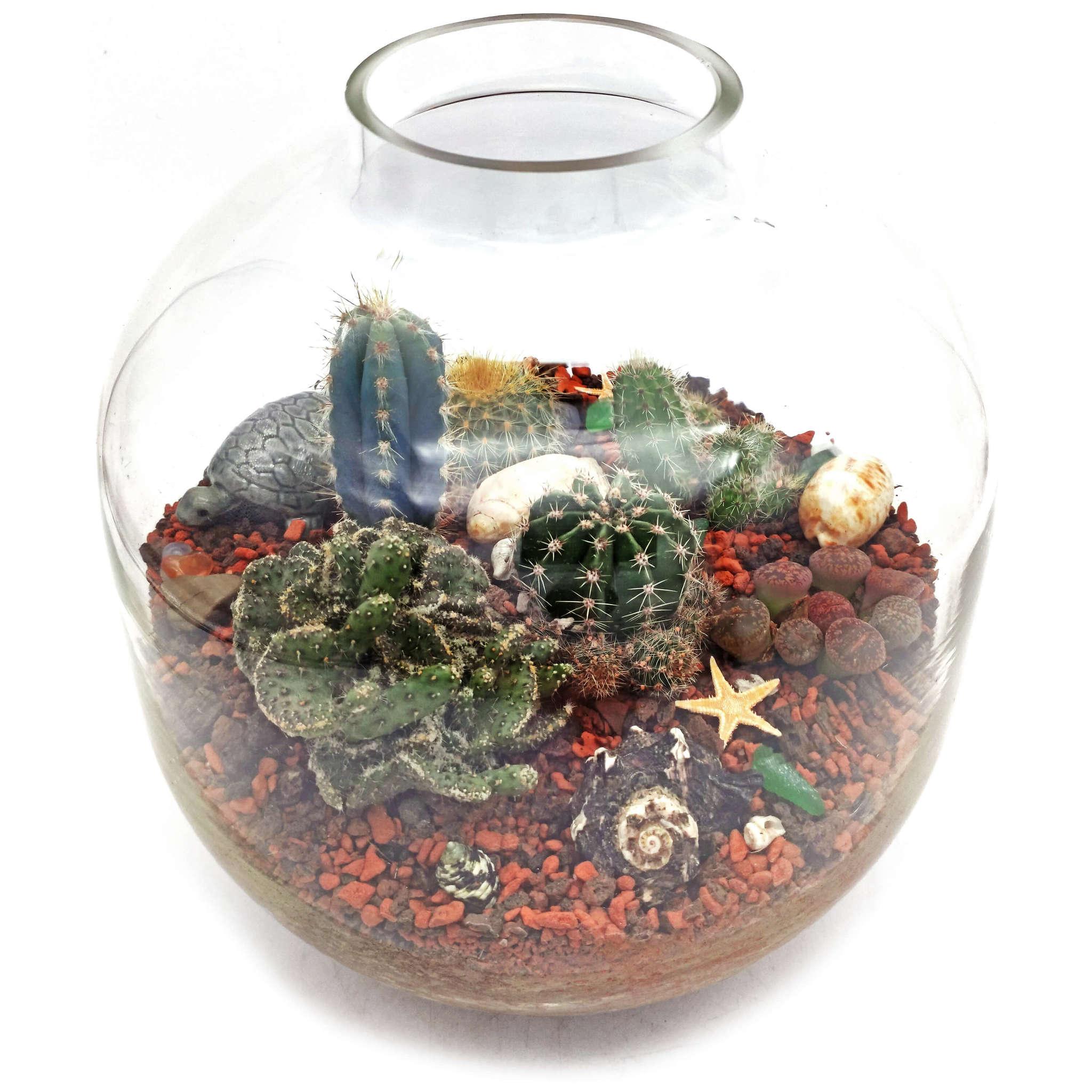 Композиция с живыми кактусами в стекле