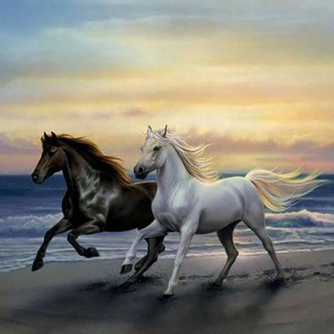 Алмазная Мозаика 40x50 Черный и белый конь скачут по побережью (арт. MTC3173 )