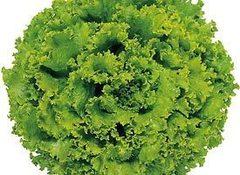 Фантайм семена салата листового (Syngenta / Сингента)