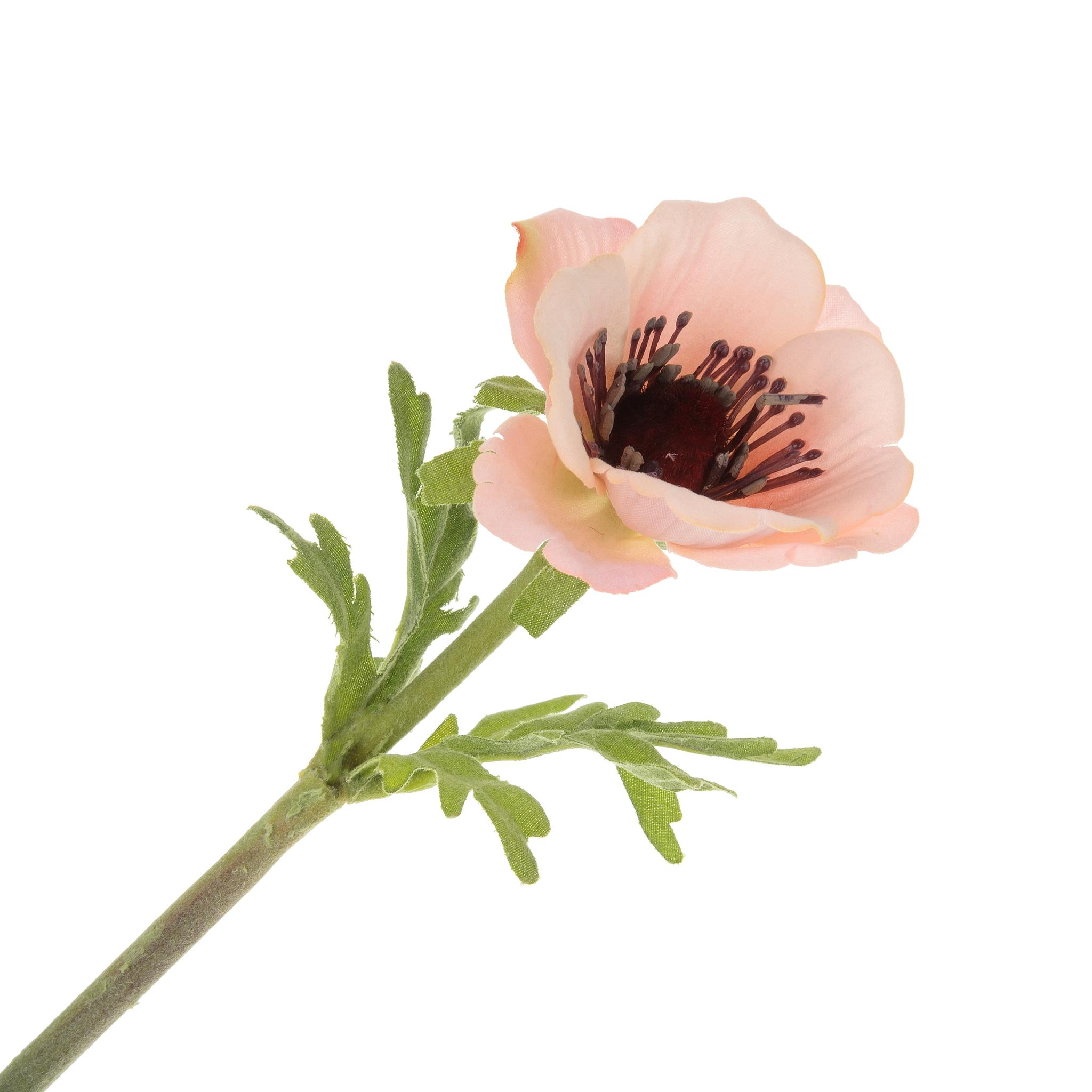 Анемон малиново-белый