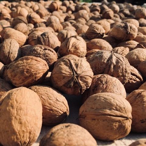 Фотография Грецкий орех в скорлупе (Краснодар) / 1 кг купить в магазине Афлора