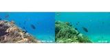 Набор фильтров PolarPro Aqua 3-Pack HERO 5/6/7 Black сравнение под водой