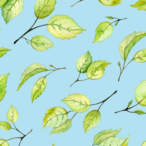 Зеленые листочки на голубом фоне