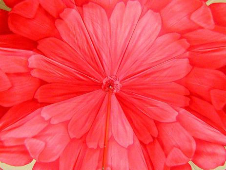 Зонт-трость Pasotti 21065-21 Red Astra