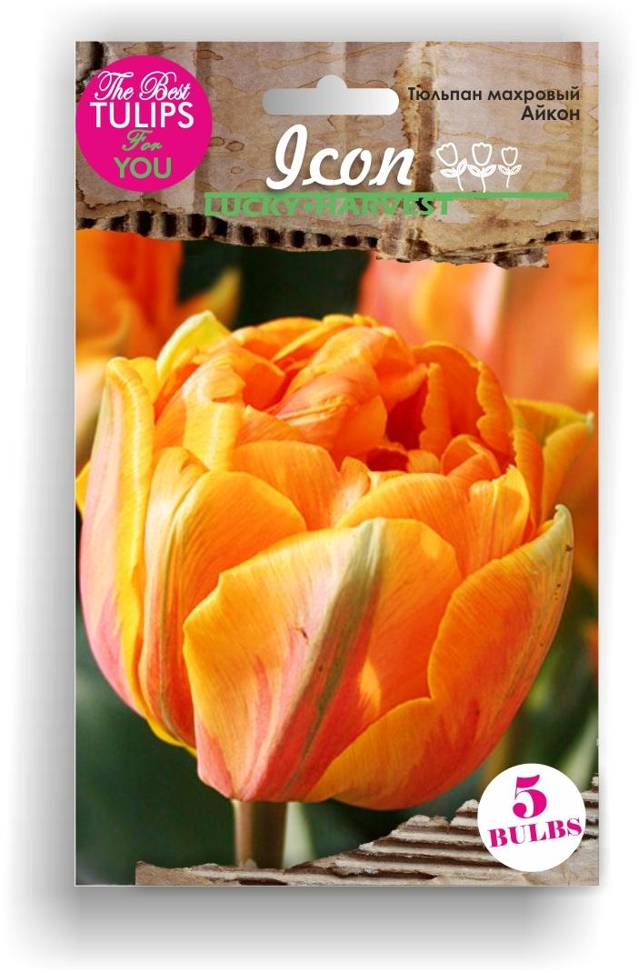 Тюльпан Махровый ранний Icon (Айкон) Украина 5 шт