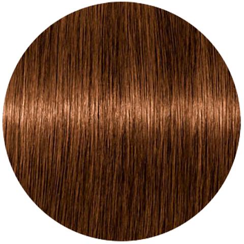 Schwarzkopf Igora Absolutes 8-60 (Светлый русый шоколадный натуральный) - Стойка крем-краска для окрашивания зрелых волос