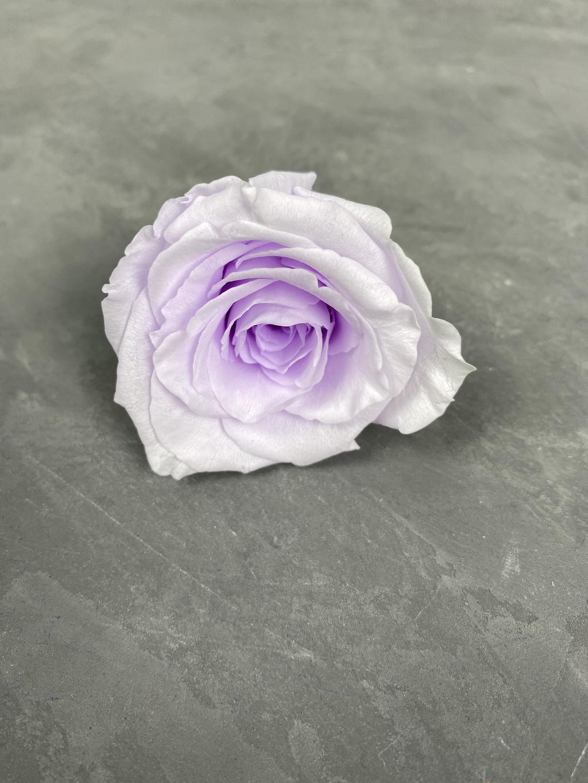 Роза классическая фиолетовая d=5,5 см