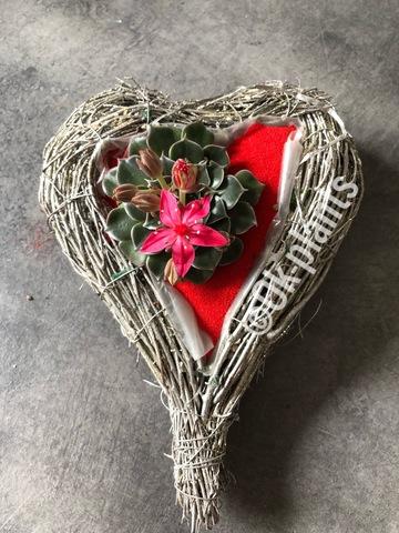 Композиция из суккулентов «Любящее сердце»