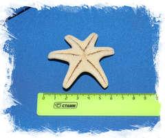 Рогатая морская звезда