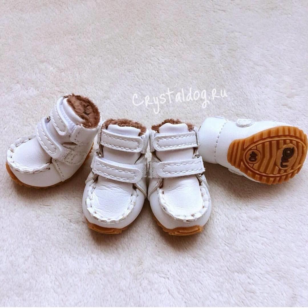 ботинки для йорка