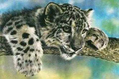 Картина раскраска по номерам 30x40 Тигренок на ветке