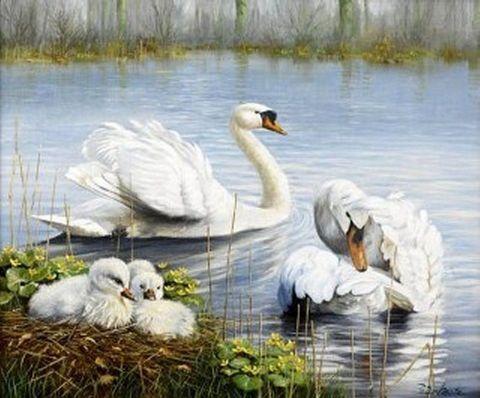 Картина раскраска по номерам 50x65 Лебеди с лебедятами