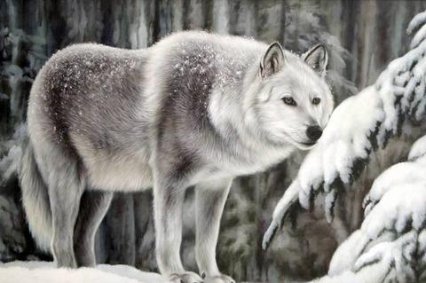 Картина раскраска по номерам 50x65 Волчица зимой