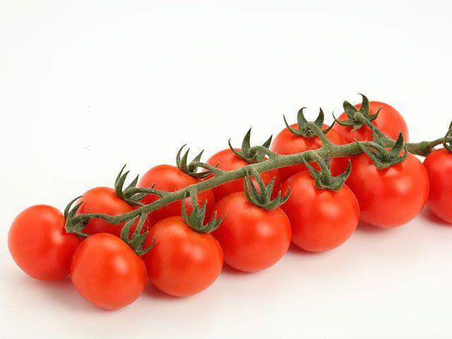 Томат Требус F1 семена томата индетерминантного (Enza Zaden / Энза Заден) Требус_F1_семена_овощей_оптом.jpeg