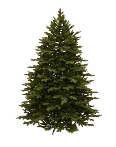 Triumph tree ель Шервуд Премиум 2,15 м FULL RE