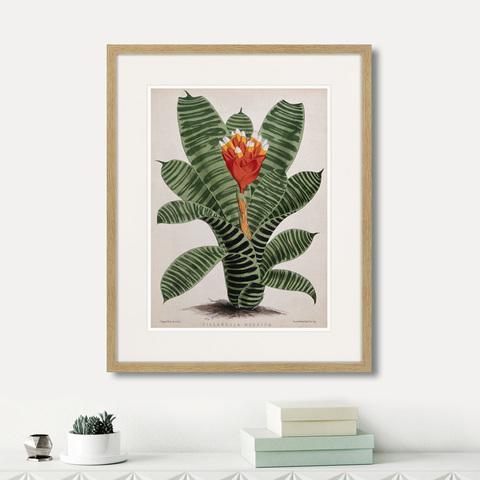 Генри Чарльз Эндрюс - Exotic plants of the world №8, 1815г.