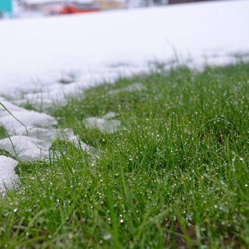 Газонные травосмеси Газон для северных регионов «Морозко» _Зима.jpg