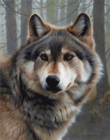 Картина раскраска по номерам 50x65 Волк вблизи