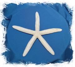 Морская звезда Фингер