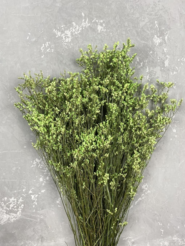 Лимониум стабилизированный салатовый