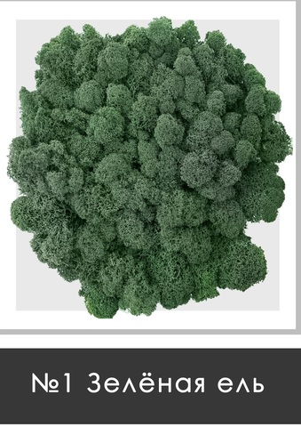 Стабилизированный мох (ягель) цвет №1 Зеленая ель