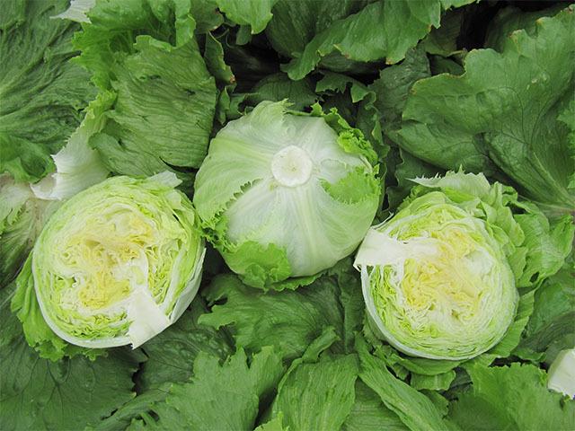 Салат Дамион семена салата айсберг (Enza Zaden / Энза Заден) Дамион.jpeg