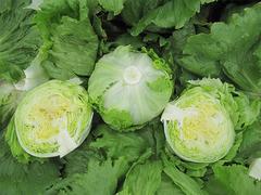 Дамион семена салата айсберг (Enza Zaden / Энза Заден)