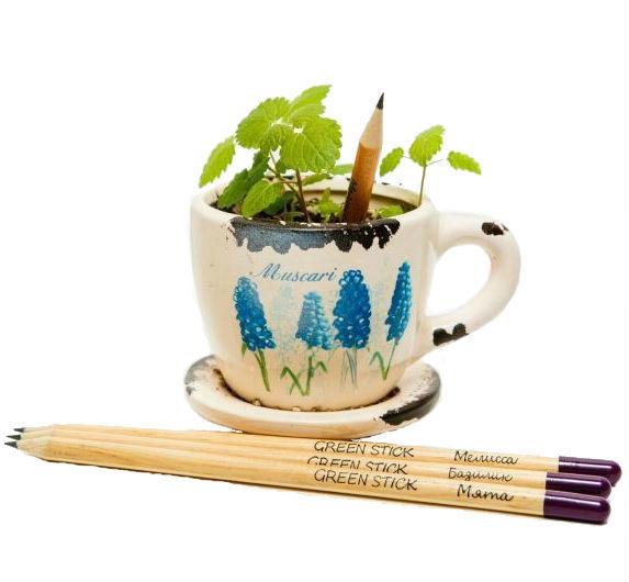 """Это интересно Растущие карандаши """"Пряные травы"""" (набор 3 шт., чернографитовые) 61dc40d7b769e59ba25e6c5a81e60572.jpg"""