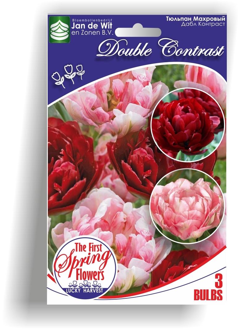 Тюльпан  Махровый   Смесь   Double Contrast  (  Дабл Контраст)  3 шт.Jan de Wit en Zonen B.V. Нидерланды