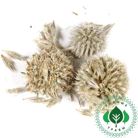 Мордовник семена