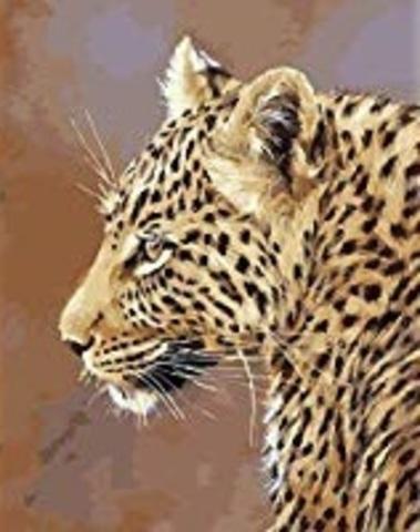 Картина раскраска по номерам 50x65 Тигрица в профиль